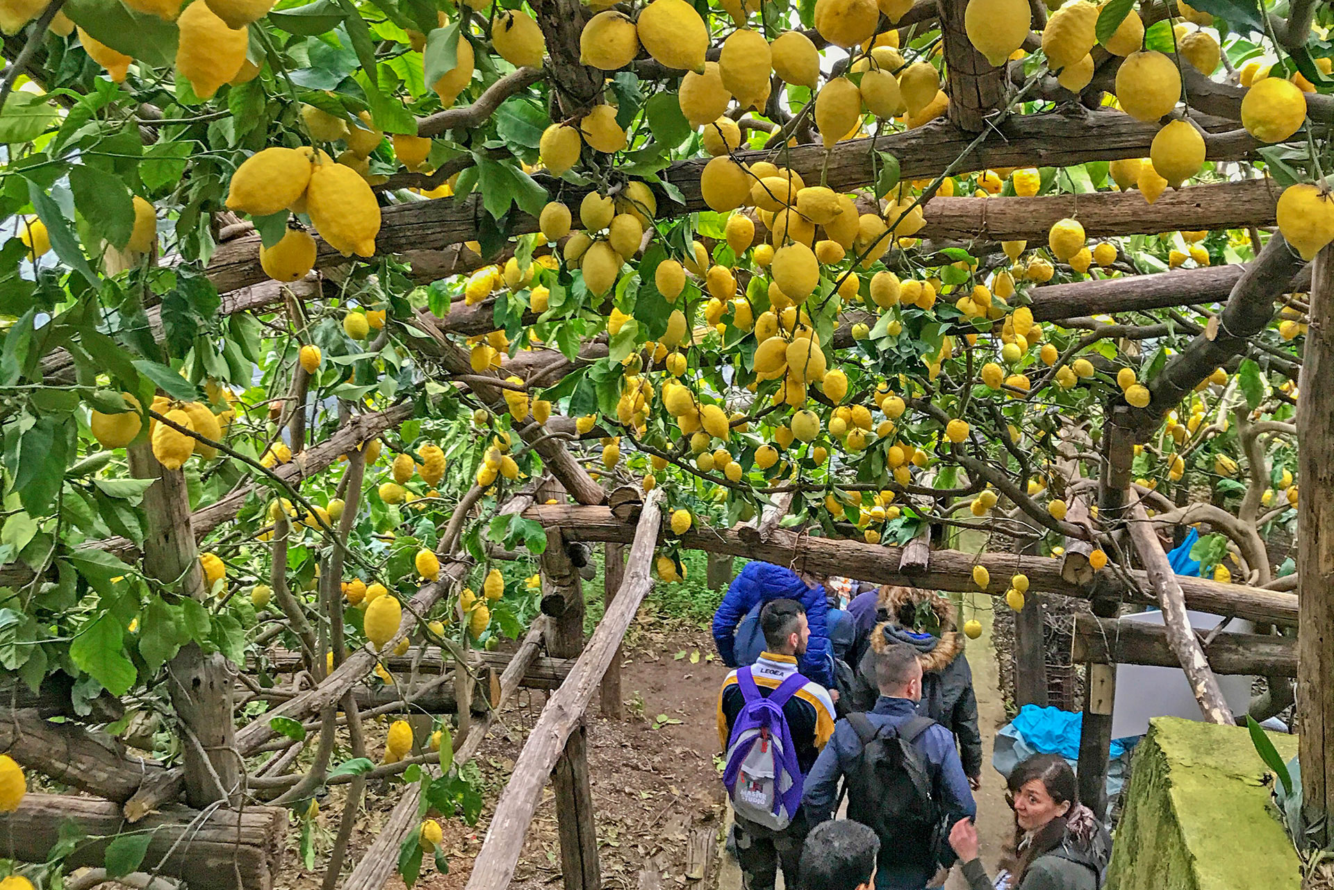 The path of the lemons, walking from Ravello to Minori and